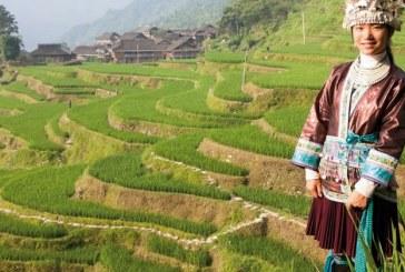 Formazione di sommelier del riso