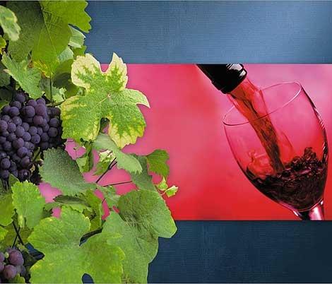 Pronto da bere il Gragnano della Vendemmia 2012