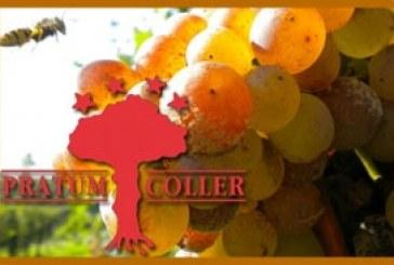 Egnews presenta l'azienda vinicola Pratum Coller