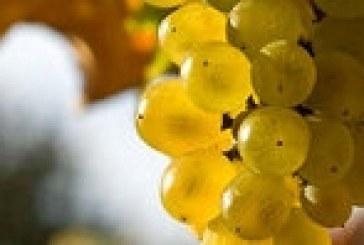 Il vino e la sua nuova dimensione