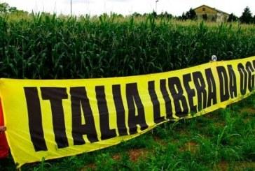 L'inspiegabile silenzio delle Istituzioni alla illecita coltura del mais Ogm