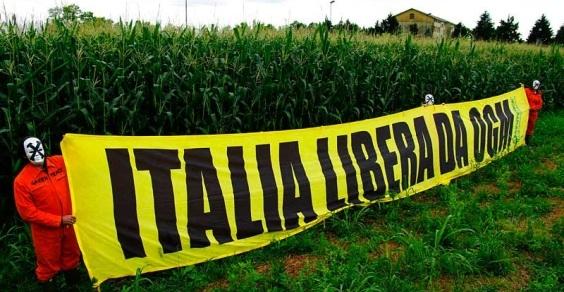 Photo of L'inspiegabile silenzio delle Istituzioni alla illecita coltura del mais Ogm