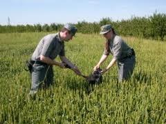 Il Ministro De Girolamo annuncia l'avvio di indagini sulla coltura del mais Ogm nel Friuli