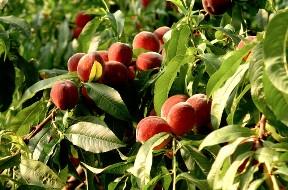 Photo of Oltre 10.000 medici tedeschi per far consumare più frutta fresca