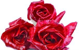 """La """"Rosa di Gorizia"""""""
