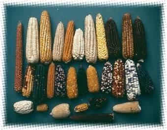 Photo of Confagricoltura e OGM: troppo restrittive le misure contrapposte