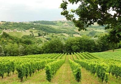 Photo of Montesole, un vino, una personalità