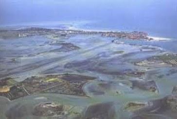 Vongole e proliferazione delle alghe