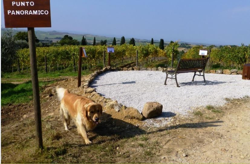 Orcia Wine Festival