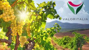 Photo of Vini certificati, garanzia di mercato