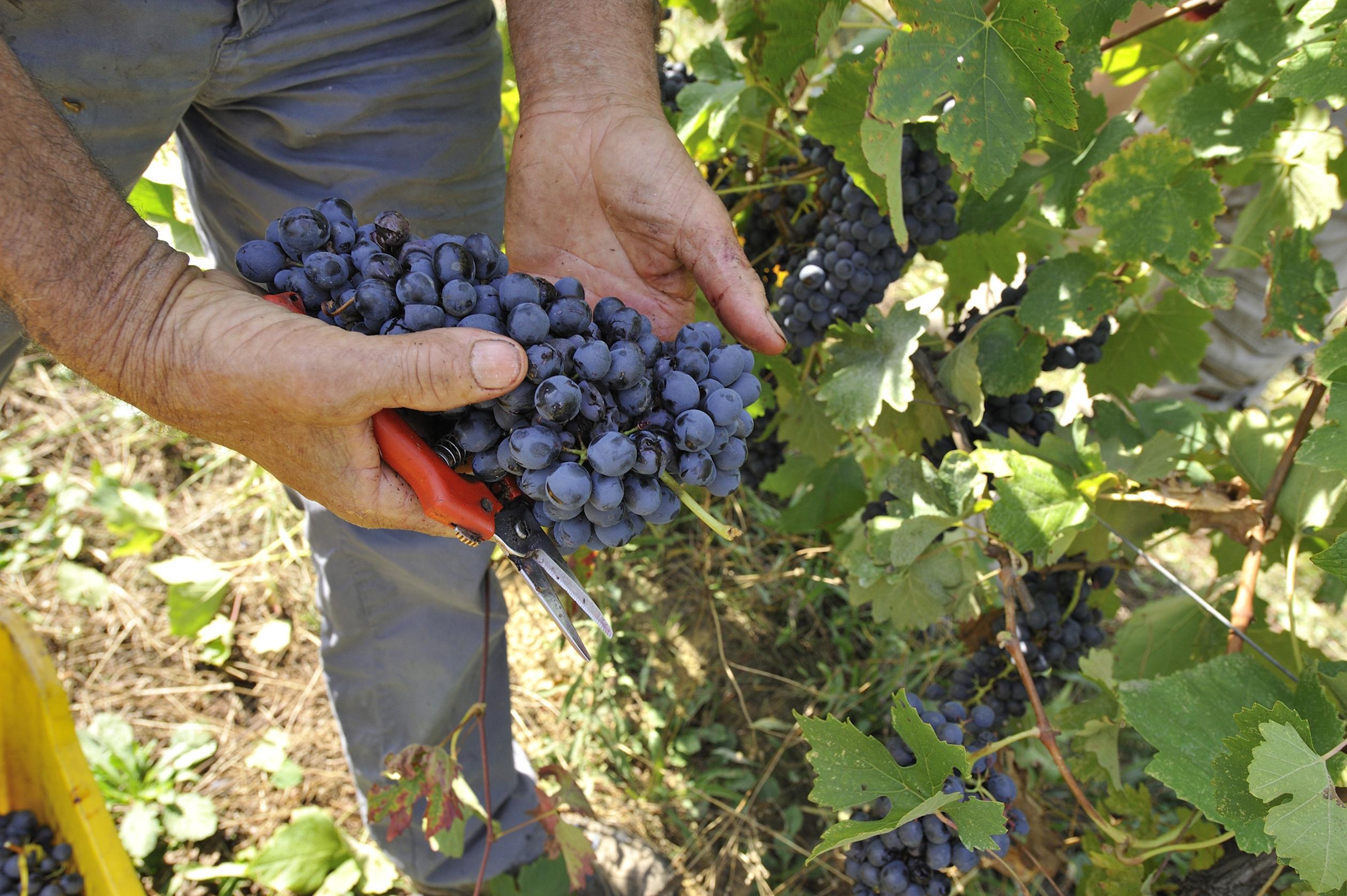 Photo of E' nata la Consulta italiana del vino