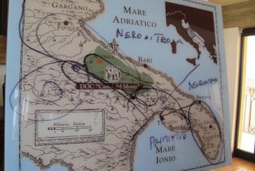 Nero di Troia: la rinascita di un grande autoctono di Puglia
