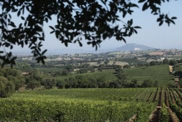 Anna's Secret: la risposta italiana ai grandi rosé francesi