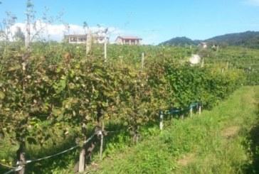 Residuo Zero, acqua all'ozono sulle viti