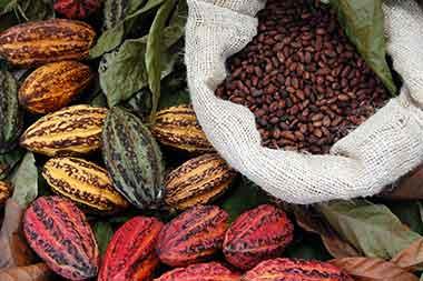 Photo of Messico ospite del Cluster Cacao e Cioccolato