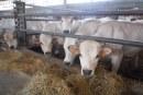 Notizie confortanti dall'Overview sui mercati agroalimentari