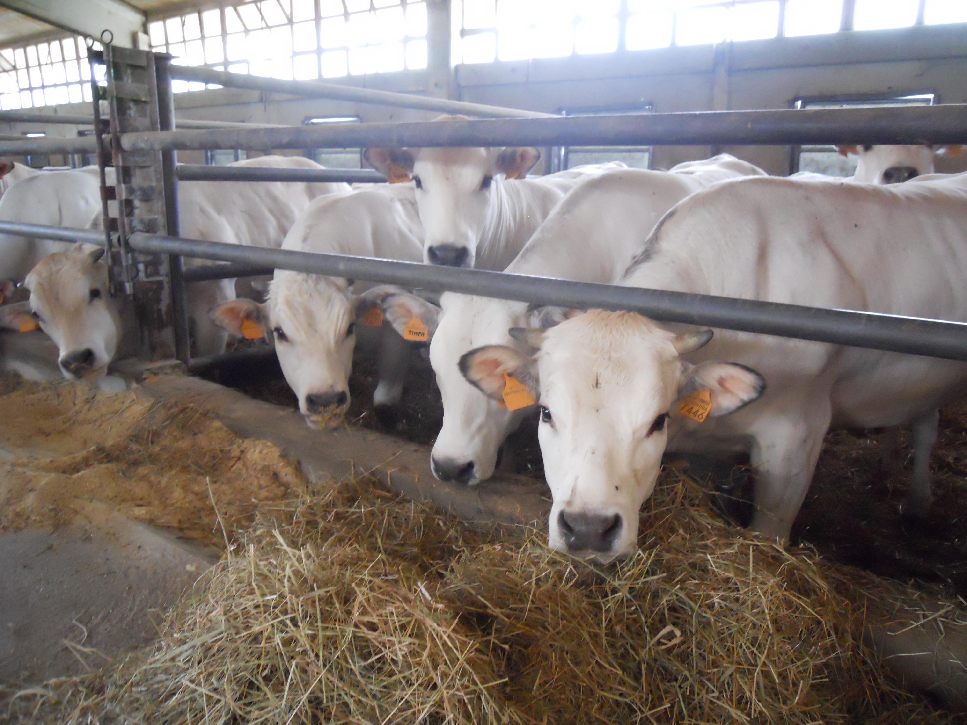 Photo of Notizie confortanti dall'Overview sui mercati agroalimentari
