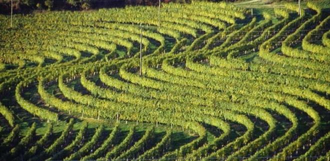 Photo of Ad Expo 2015 i vini pregiati della Slovenia