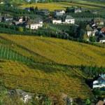 Bollino di platino allo Chardonnay Lageder