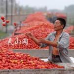 Pomodori cinesi nelle confezioni di salsa italiana