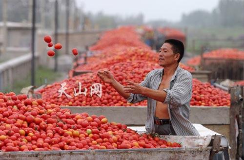 Photo of Pomodori cinesi nelle confezioni di salsa italiana