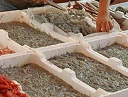 Photo of In Toscana e Liguria via libera alla pesca del rossetto