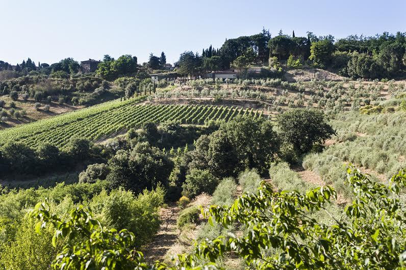 Photo of Donne del vino, liriche e cultura del vino.