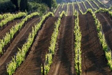 ONAV degusta i vini dei Balcani