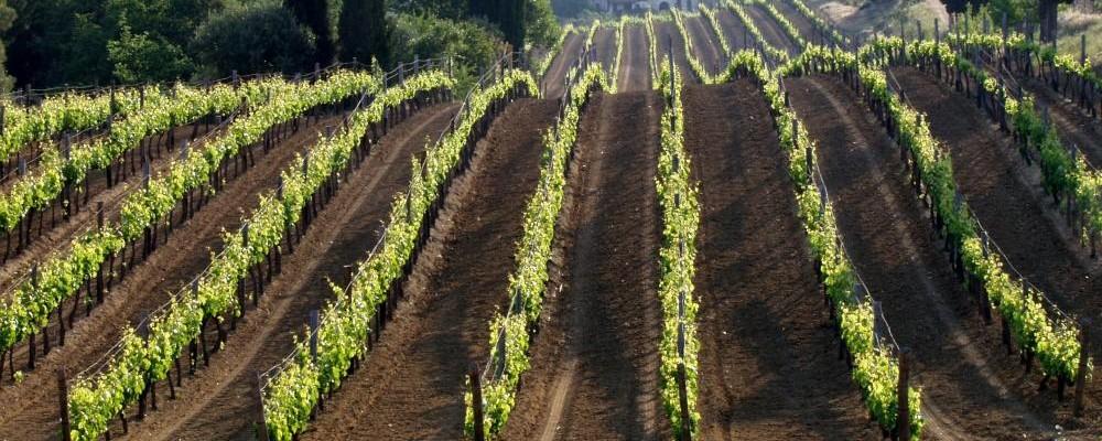 Photo of ONAV degusta i vini dei Balcani