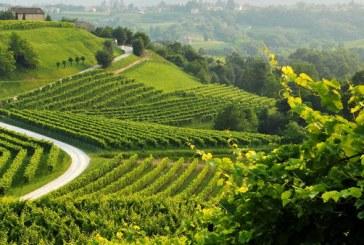 La prima industria italiana è il vino