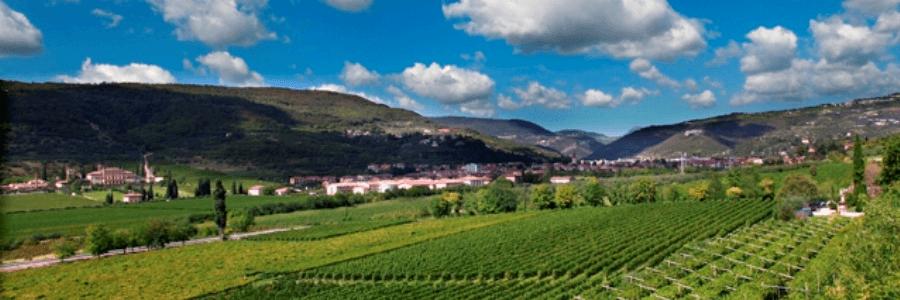 Photo of Valpantena, una valle, una cantina e tante medaglie