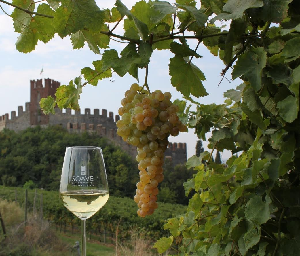 Photo of Soave: a caccia di novità 14 buyer U.S.A.
