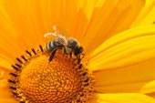 La Regione Toscana in favore dell'apicoltura