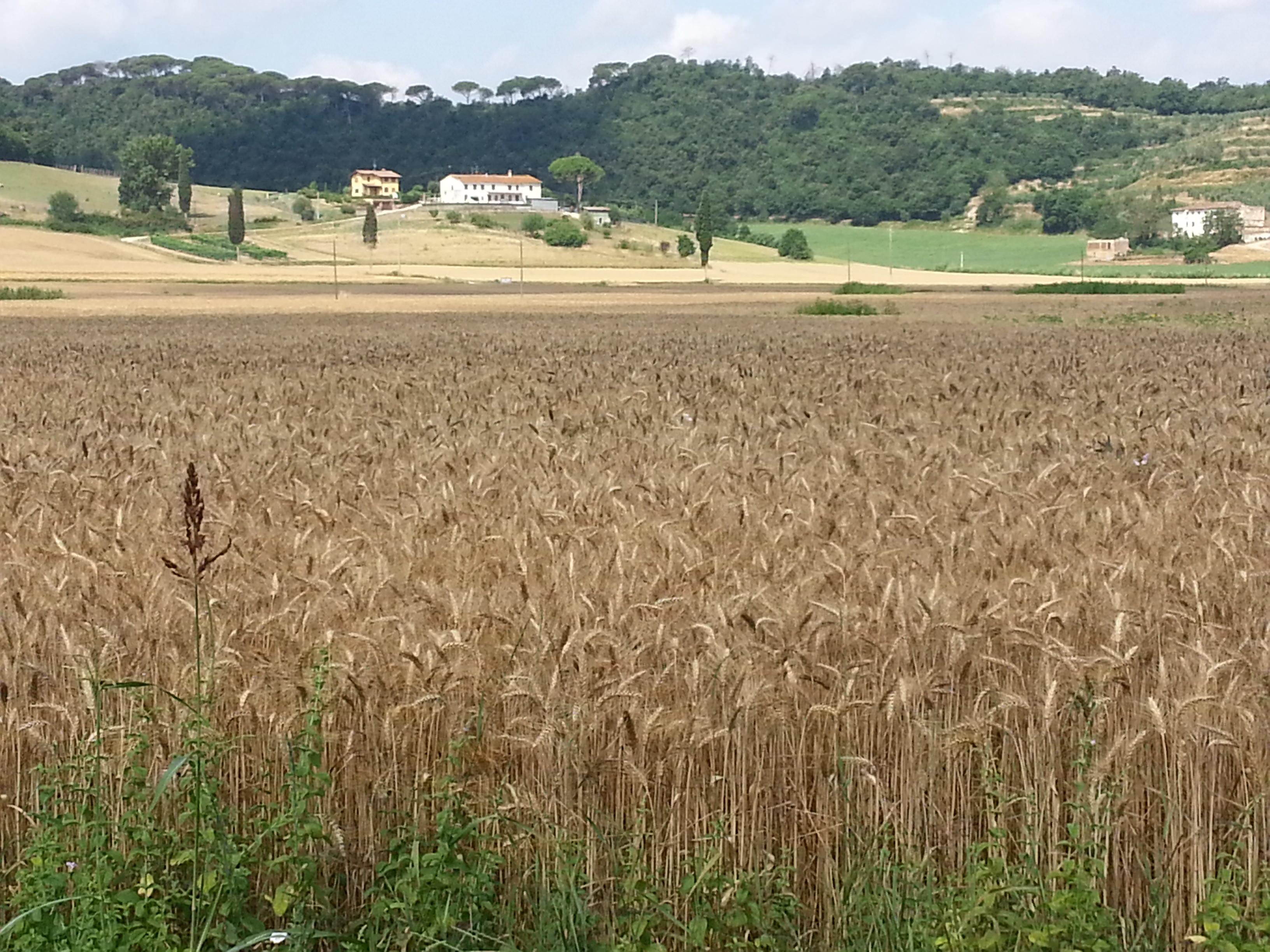 Toscana Felix