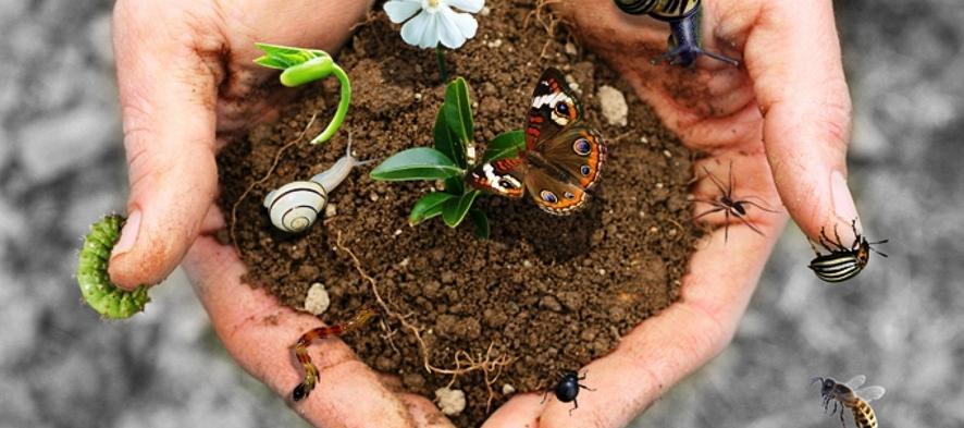 Photo of Biodiversità: chi la conosce!