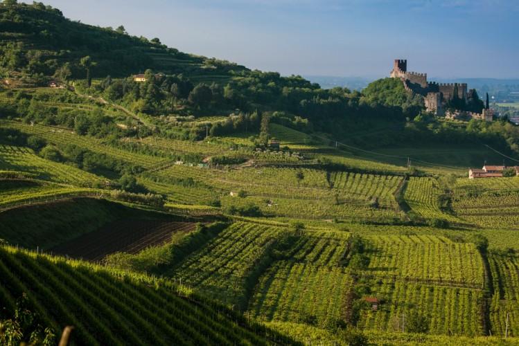 Photo of Le Vie Verdi del Soave, un percorso di formazione green