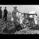 Sempre più donne nelle aziende agricole