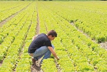 Terreni pubblici in vendita nella Banca delle terre agricole