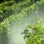 Per i viticoltori che usano diserbanti con glifosato