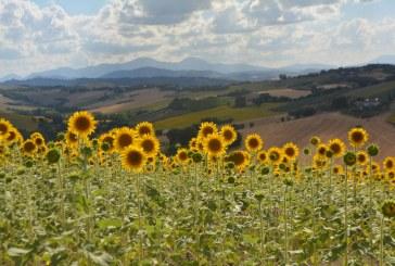 Alla scoperta della Vallesina: vini, paesaggi, storia ed arte
