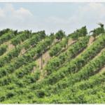 I vini dell'Irpinia vicinissimo il riconoscimento