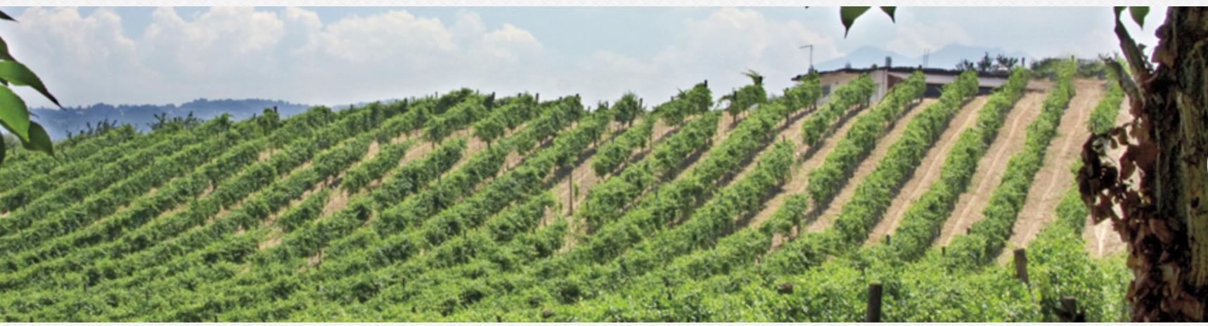 Photo of I vini dell'Irpinia vicinissimo il riconoscimento