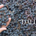 Arcole doc Nero 2015 premiato a Verona Wine Top