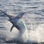 Non c'è pace per la nostra pesca