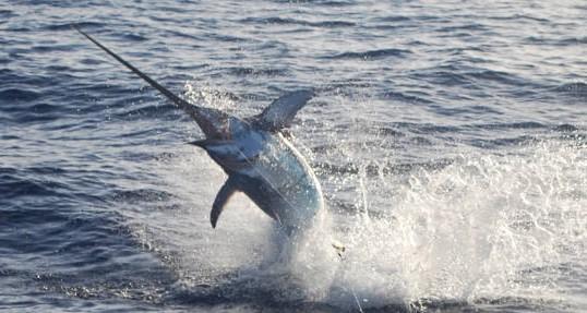 Photo of Non c'è pace per la nostra pesca