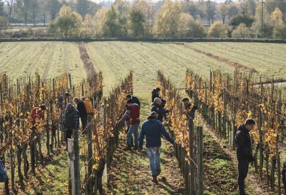 La potatura delle viti si impara