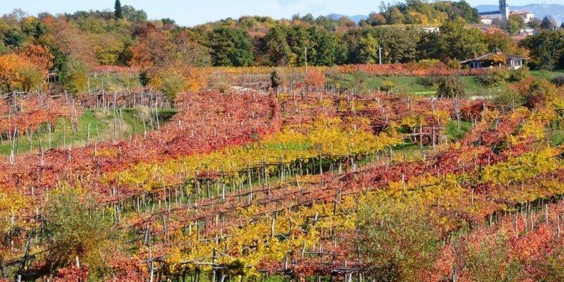 Il Terrano Doc Friuli Venezia Giulia sarà transfrontaliero, c'è un disciplinare