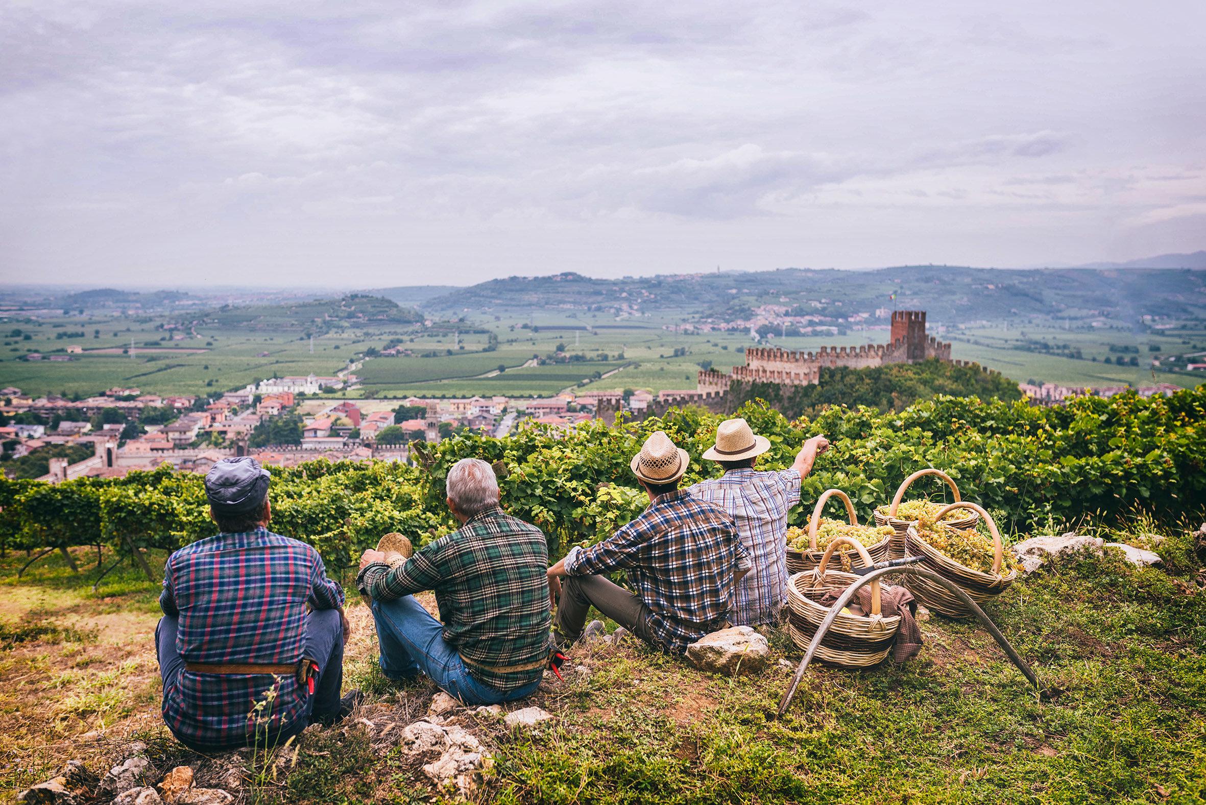 Photo of Territorio vitato colline di Soave protetto dalla FAO