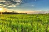 Nasce il  fondo IDeA Agro per la filiera agricola
