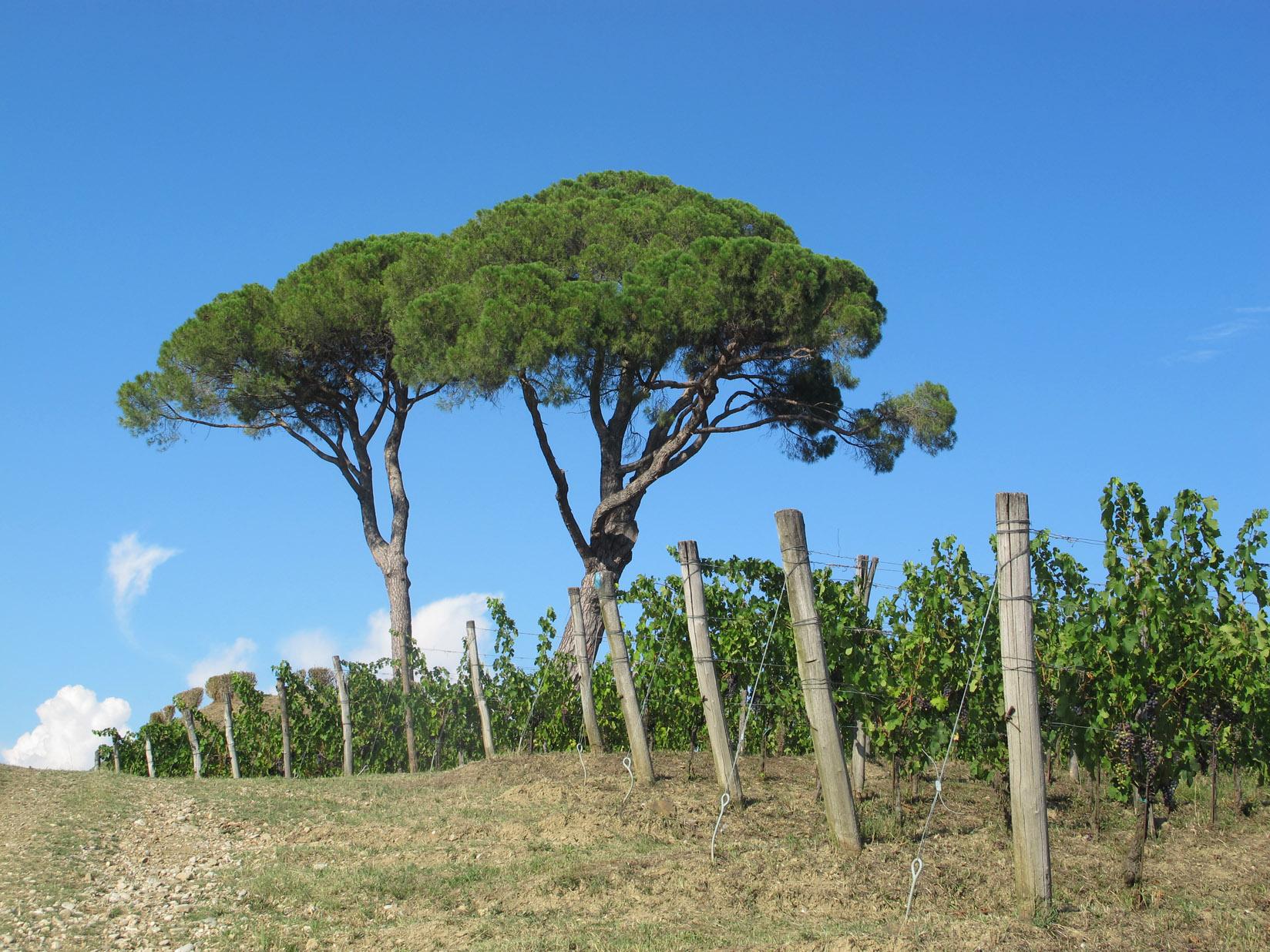 Photo of Alla scoperta a visitare alcune aziende del vigneto Friulano